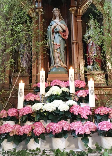 St. Martin Staufen: Marienalter geschmückt mit rosafarbenen und weißen Hortensien © V.Gäbke